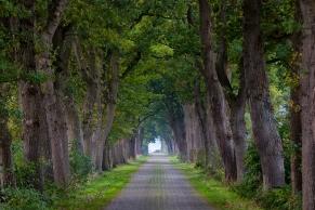 Allee im Herbst, Varel, Landkreis Friesland, Niedersachsen