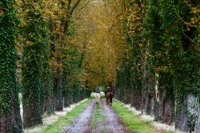 Zwei Reiter reiten durch eine Allee, Basinghausen, Niedersaxhsen