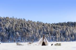 Zeltlager mit Rentier