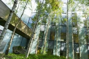 Birkenbäume im Innenhof