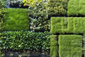 Fassadenbepflanzung