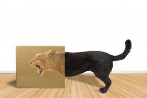 Hund in einem Karton