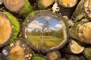 Holzstapel mit Foto A8849