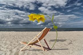 Liegestuhl mit Sonnenblumeschirm