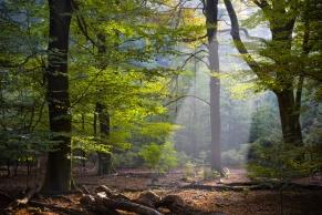 Waldlichtung mit Sonneneinstrahlung